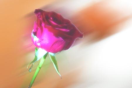 Gleichberechtigung statt Blumen